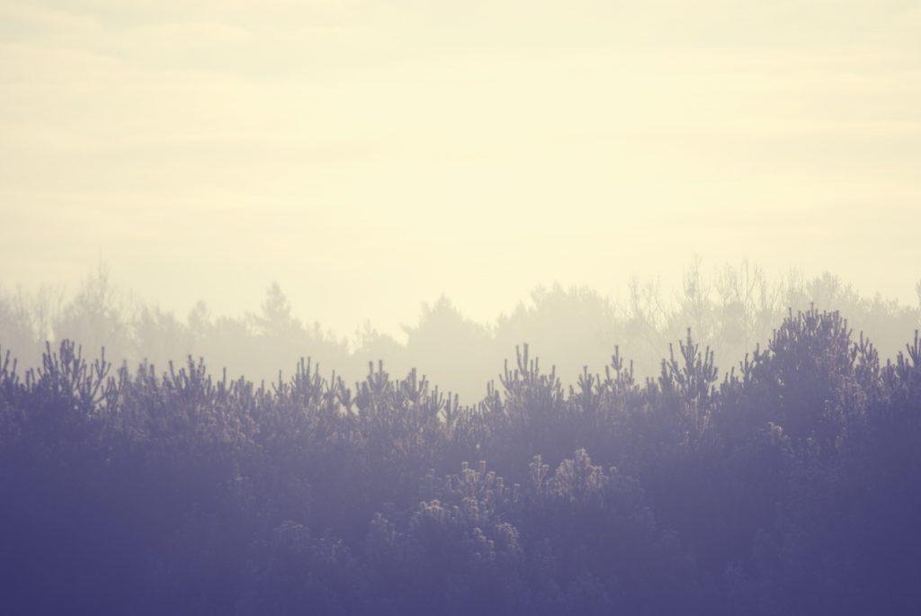 landscape-trees-winter-8781